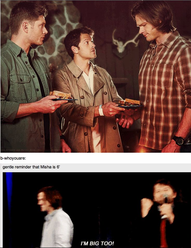 """[GIF] """"I'm big too!!"""" .... Meanwhile, Misha.......throws a tantrum because he's a precious little angelmouse and then there's Moose."""