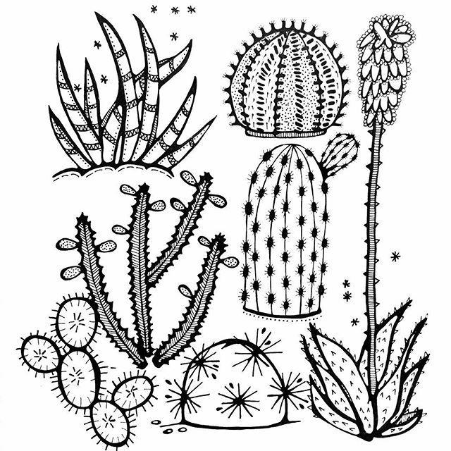 Finished! Drawing 21/31, subject: Draw a Cactus. Tijd voor een groot glas water. Ik heb gewerkt aan deze tekening mezelf betrappend op 100% genieten. #blackandwhite #creativebug #CBDrawADay #tekenen #draw #drawing #tekening #cactus #kaktus #creativelifehappylife #creativelife #createeveryday