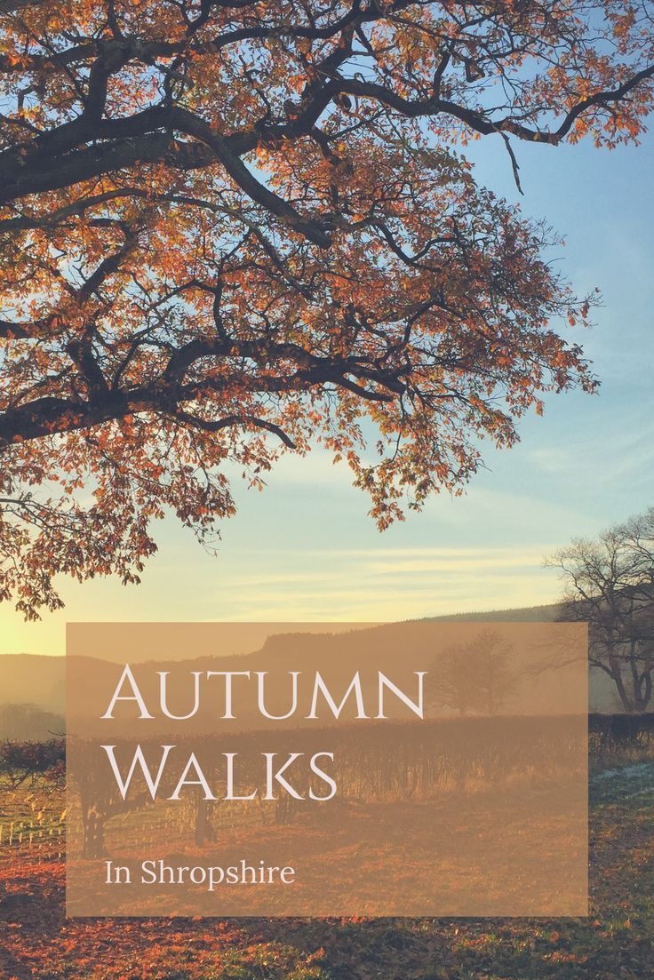 Shropshire is perfect for long walks in the countryside in Autumn