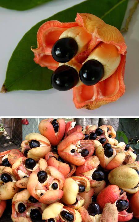 【アキー 】  アフリカ原産でジャマイカの食文化に重要な果実。アフリカではほぼ食べられていないが、 ジャマイカに持ち込まれてからジャマイカの国 民的な食材となっている。甘みはなくクルミのような刻のある味わいで、様々な料理に使われる。