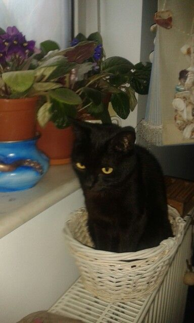 Special Pufi, my cat is so  not like other cats,