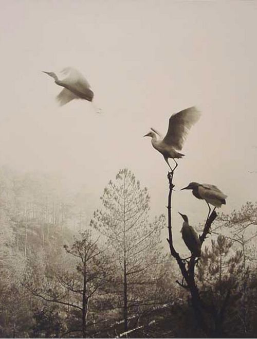 Nov 21 2011 | firsttimeuser:  Don Hong-Oai. Birds in Flight