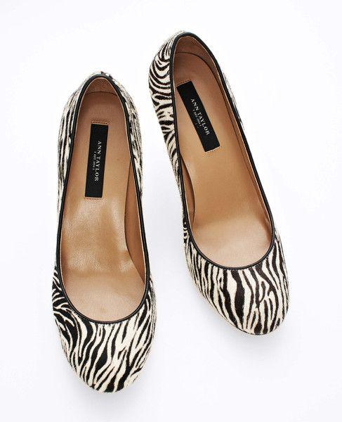 exotic zebra