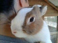 Thelma e Louise: Conigliette in adozione