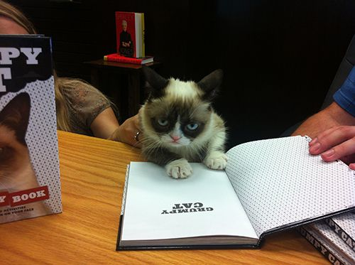 The famous Grumpy Cat signs his recent book