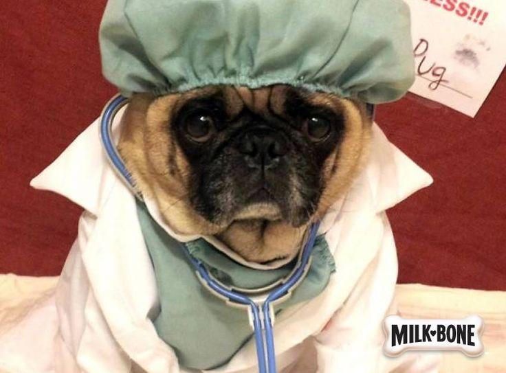 Funny Board: Milk Bone presents the Surgical Nurse Dog!