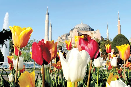 Tulip in Istanbul! beautiful! I  wanna go there~~
