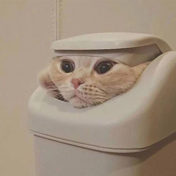 Olenna Tyrell  Follow us on: - https://goo.gl/NKk858 - Twitter: https://goo.gl/PlLXiR - Pinterest:https://goo.gl/9NIzFX - Facebook:https://goo.gl/Y7XnNU  #gamesofthrones #russianminiatures #got #winteriscoming #cat #cats #catsofinsta #catsofinstagram #catstagram #cutecat #catoftheday #lovecats #kitty #bengal #cats_of_instagram #dailycat #bestmeow #kitten #kittensofinstagram #meow #catsareawesome #loveofmylife #lovekittens #kittenlove #lazycat #котик #kittycat