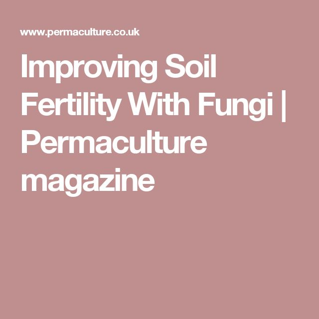 Improving Soil Fertility With Fungi | Permaculture magazine