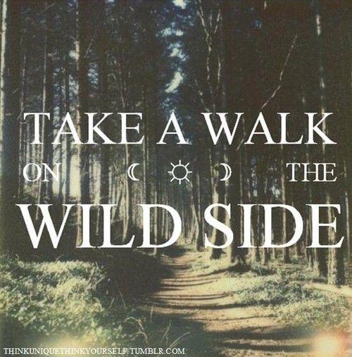 Not3s Trekked Like Me Lyrics: 27 Best Safari Quotes Images On Pinterest