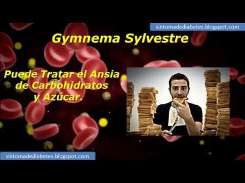 Gymnema Sylvestre | Sintomas diabetes tipo 1 y diabetes tipo 2 - http://dietasparabajardepesos.com/blog/gymnema-sylvestre-sintomas-diabetes-tipo-1-y-diabetes-tipo-2/