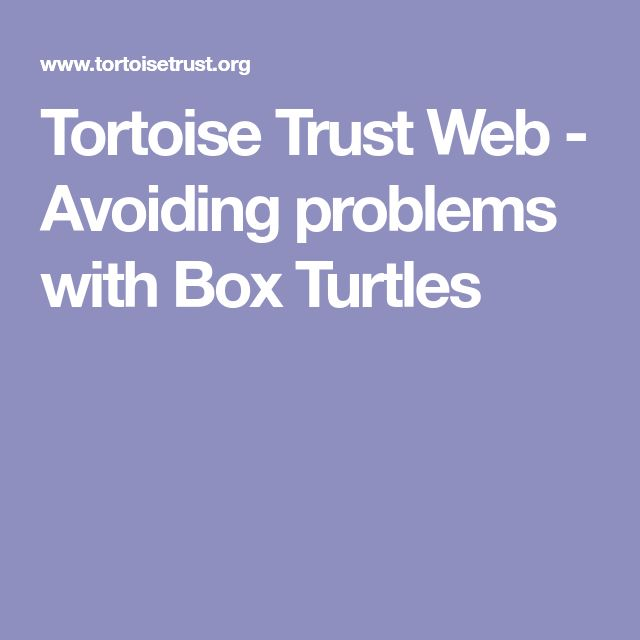 Tortoise Trust Web - Avoiding problems with Box Turtles