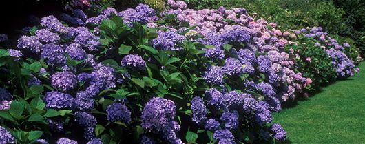 Blomster i haven året rundt - Ekspertviden, Haveblomster, Have, Blomster, Stauder, Prydbuske, Blomstrende Buske, Forår...