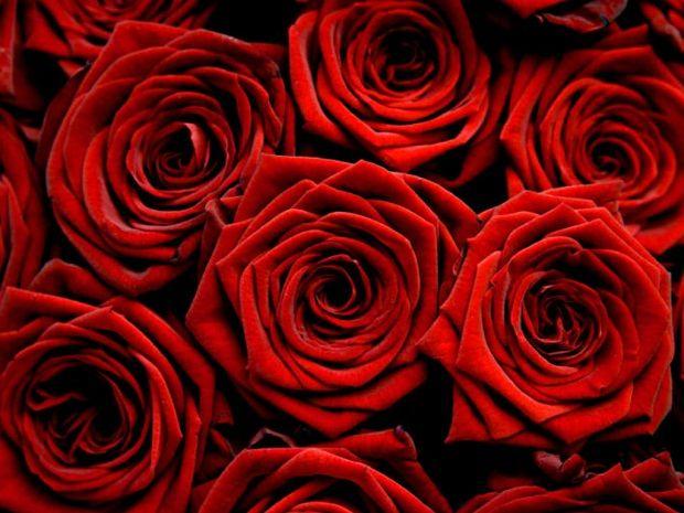 Güzelliğin Simgesi: Gül    Latince adı, Rosa Damascena olan bitki Mayıs-Haziran aylarında beyaz, pembe, kırmızı renkli nefis kokulu çiçekler açan, dikenli bir bitkidir. Ülkemizde Isparta gülleri, gül ürünlerini elde etmek bakımından ünlüdür.    Kullanılışı:    1.Gülkurusu: Güller tomurcuk halindeyken, sabah güneş doğmadan evvel toplanır ve gölgede kurutulur. Daha sonra kullanılacağı zaman suyla kaynatılır.