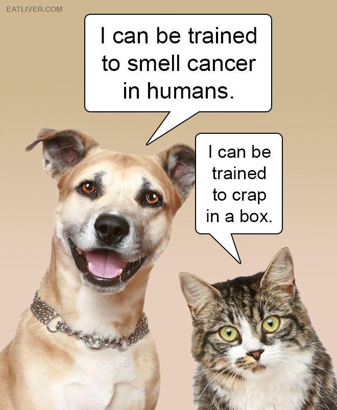 Cats Vs Dogs Dog Humor Cartoon Cat Vs Dog Crazy Cats