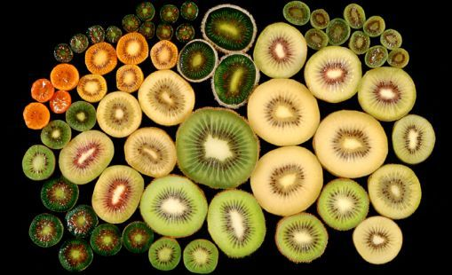 NZ RESEARCH STORY - Plants and vitamin C - Knowing that kiwifruit were very rich in vitamin C, researchers at Plant & Food Research were prompted in 2002 to find out why.