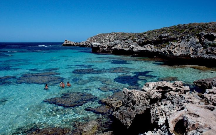 The diversity of fish, coral species and shipwrecks in the waters surrounding Rottnest Island make it one of the most fascinating snorkelling destinations! #celebratewa