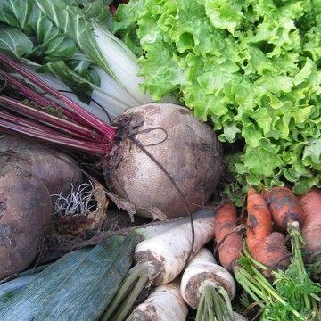 Août, planter et semer un potager pour l'automne et l'hiver