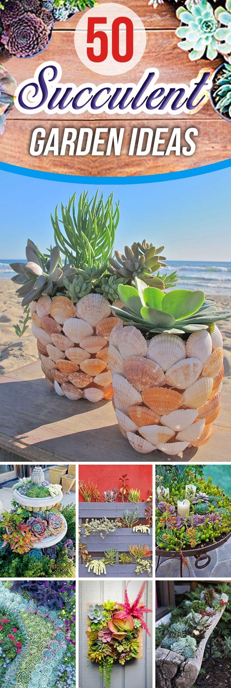best succulents images on pinterest propagating succulents