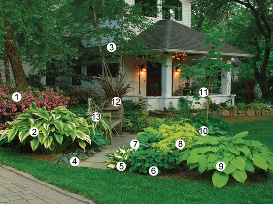 "SHADE PLANTS 1.""Rosebud"" azalea 2.""Aureomarginata"" Hosta 3.River Birch 4. Chinese Ginger 5. ""Eternal Flame"" Hosta..."