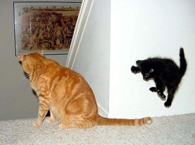 From the golden era of cat photos online