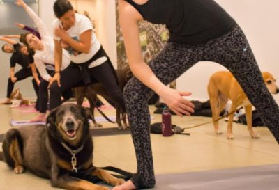 Theres A Dog Yoga Class Happening In Toronto Today And Its Free