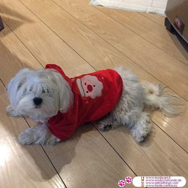 Sweat Rouge pour Chien avec Père Noël #VetementChiens #BichonMaltais - Une belle robe pour votre chien (chihuahua, caniche,..) pour les fêtes de Noël, même chaudes et douces: le sweat-shirt rouge avec le Père Noël