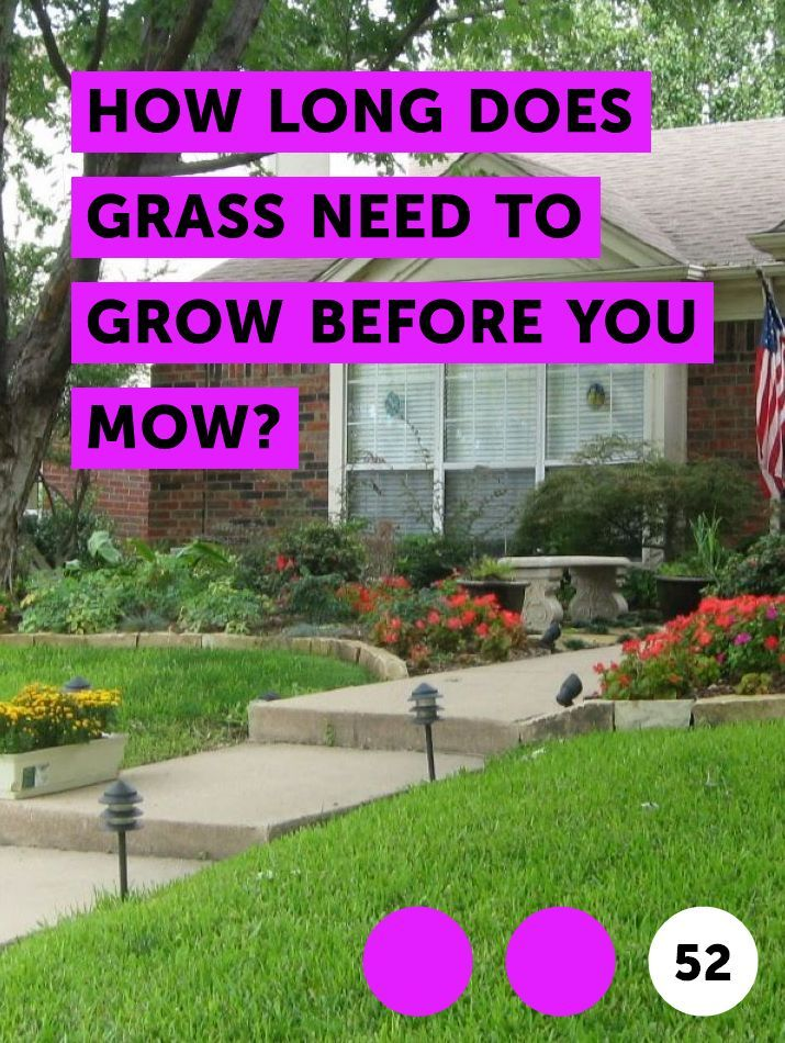 Learn How Long Does Grass Need To Grow Before You Mow How To Guides Tips And Tricks Ground Cover Garden Soil Jasmine Ground Cover