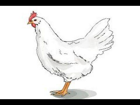 How to draw a White Leghorn Chicken