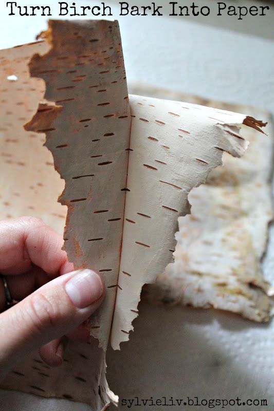 SylvieLiv: How To Turn Birch Bark Into Paper #DIY #papermaking #tutorial
