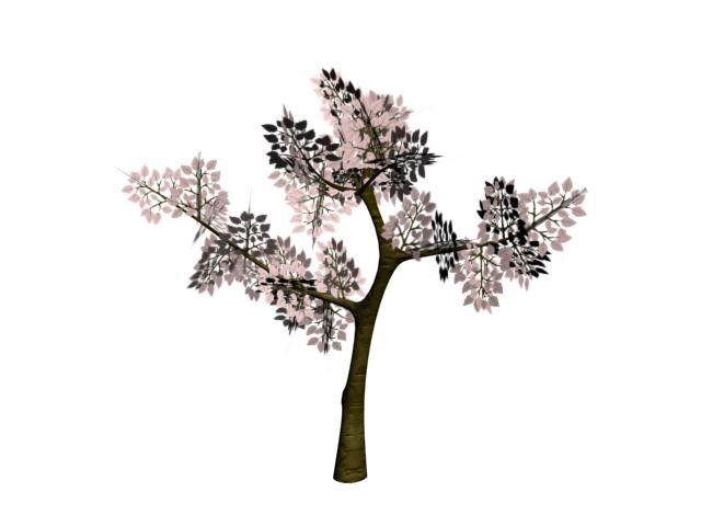 Maya Tree Arbre Cerisier - 3D Model