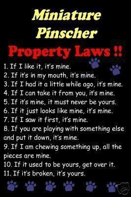 Min Pin Laws ... probably applies to most dogs but I love how it completely fits Jada!!
