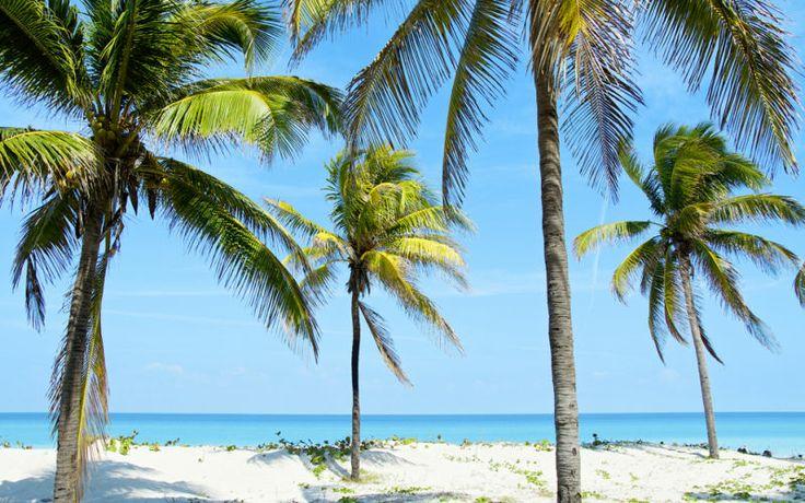 Kuuba, Varadero. Nauti kristallinkirkkaista vesistä ja vitivalkoisista rannoista huojuvine palmuineen. www.apollomatkat.fi #Kuuba #Varadero