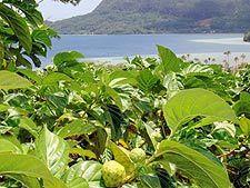Этот экзотический фрукт растет в Малайзии, Полинезии, Австралии и Юго-Восточной Азии.