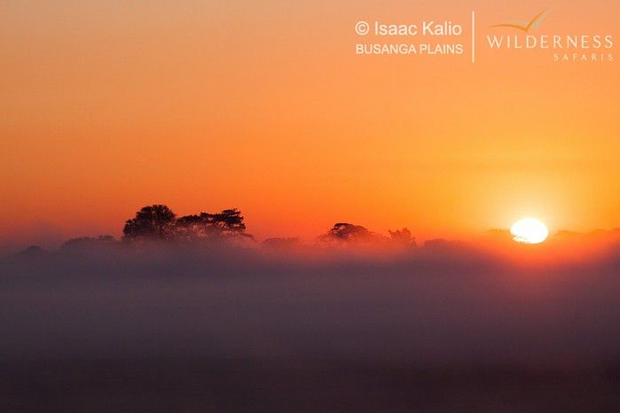 July in the Busanga Plains #sunrise #Kafue #Zambia