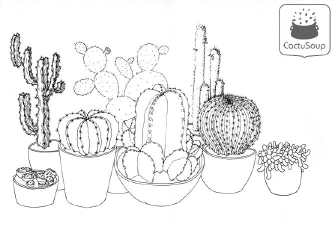 Cactus Flower Line Drawing : Cactus drawings google search doodling ideas