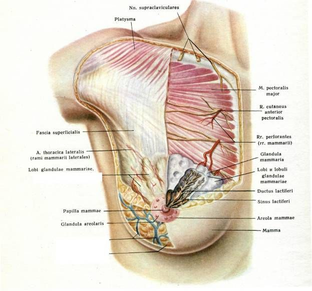 The 206 best All About Fascia - What is Fascia? images on Pinterest ...