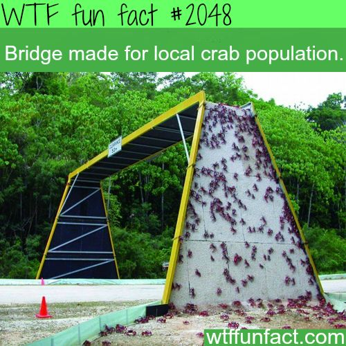 Bridge made for local crab population - WTF fun facts