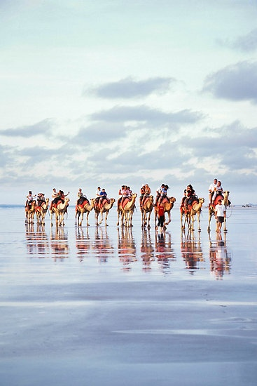 Camels #cablebeach #broome #westernaustralia