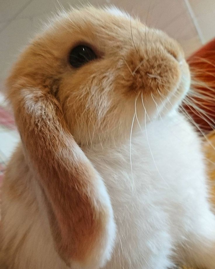 Картинки кроликов прикольные, именины картинки поздравления