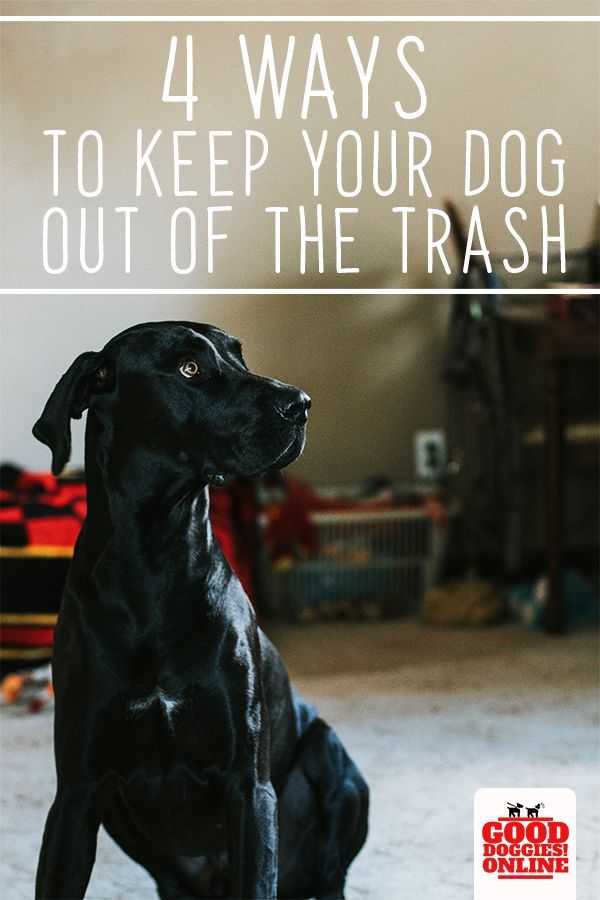 How To Keep Your Dog Out Of The Trash Or Garbage Dog Training
