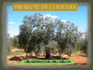 projecte-de-lolivera by EDUCACIO INFANTIL via Slideshare