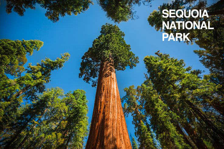 RVillage folks Mortons On The Move will be visiting Sequoia National Park... have any tips on where to stay & what to do? #RVing