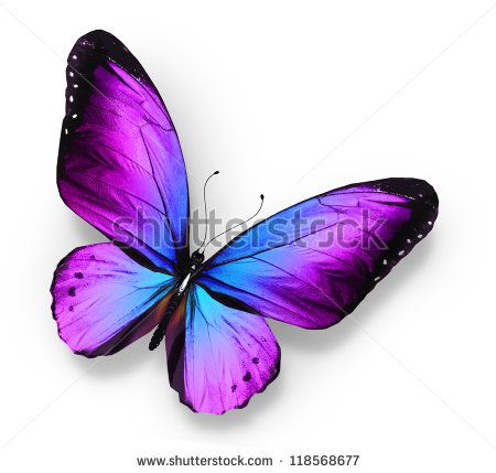 Violet blue butterfly , isolated on white - stock photo