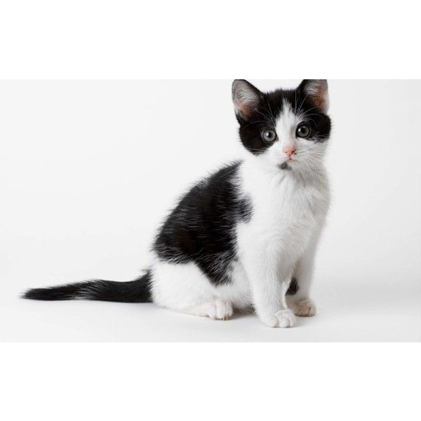 AVAILABLE CATS Little Shelter Animal Rescue Adoption Center ❤ liked on Polyvore featuring home, home decor, cat home decor and dog home decor