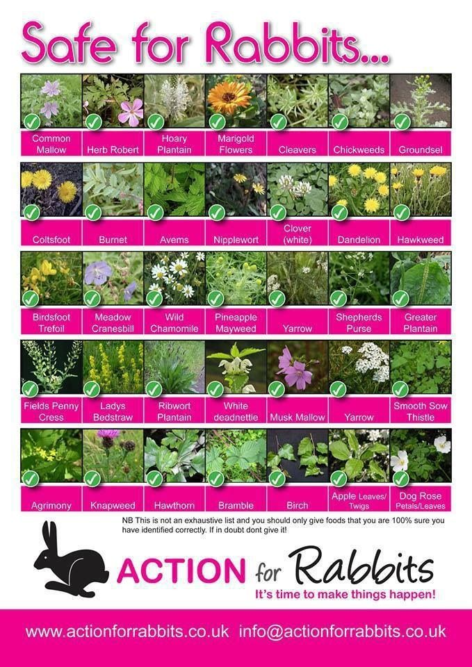 Bunny safe plants for your garden! (UK Based so your weather might mean you can't grow all of this)
