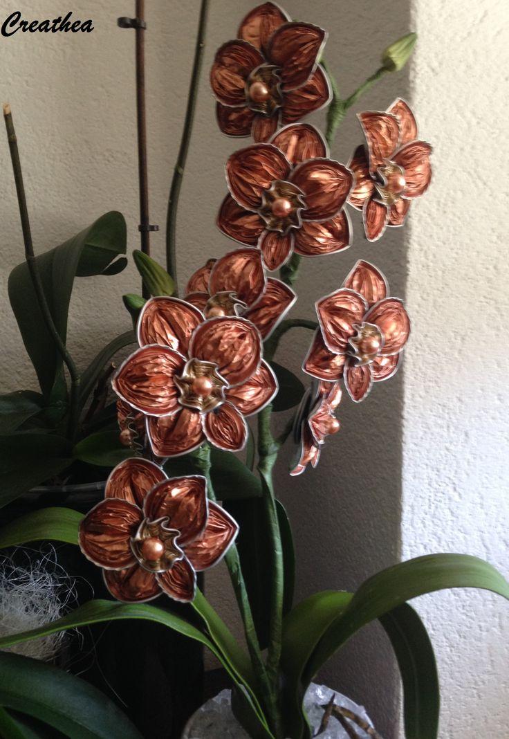 Nespresso:Ultima piantina di orchidea