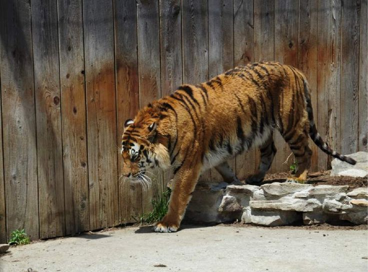 Living Treasures animal park plans upset Liberty residents