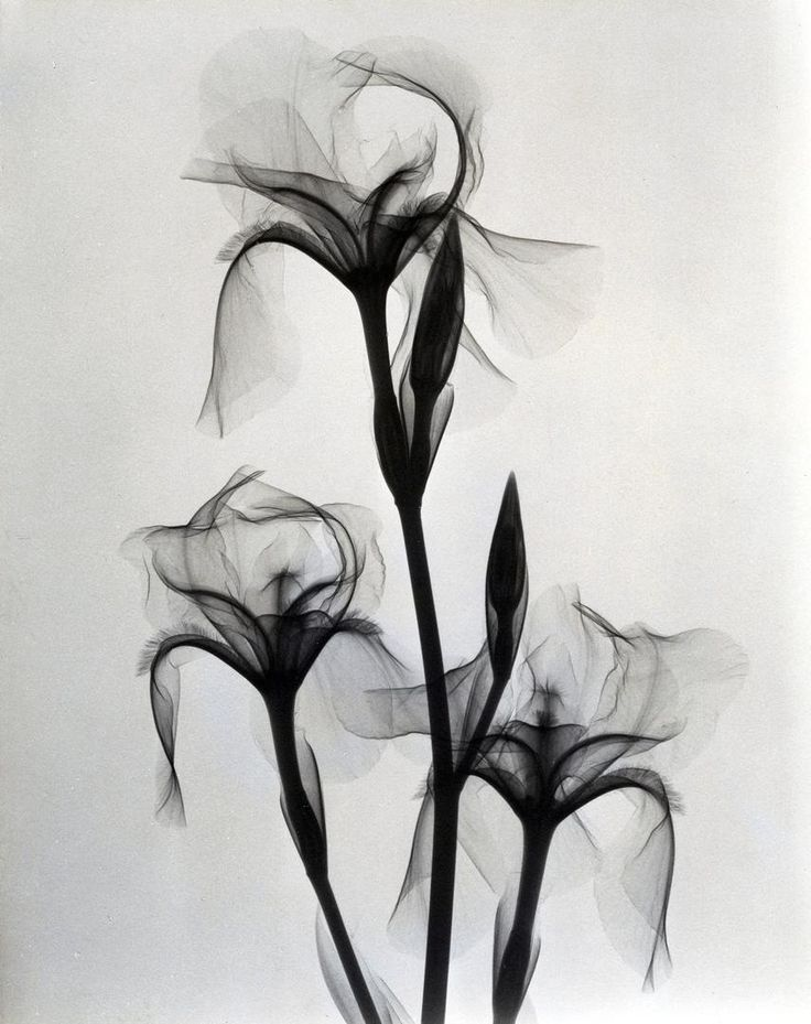 xray-fleur-01