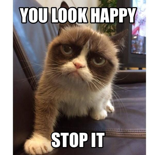 Best Grumpy Cat Images On Pinterest Funny Things Funny - 17 cats that are angry grumpy and fed up with everything